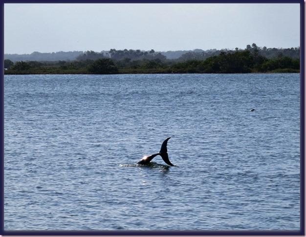 DolphinIMG_0967[4]