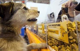Cão observa vitrine de estande de padaria que produz mais de 20 tipos de biscoitos caninos (Foto: Frank Rumpenhorst / AFP)