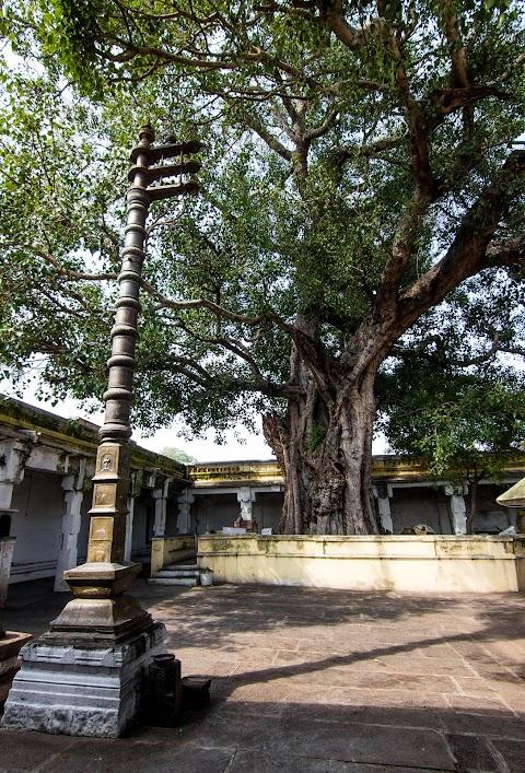 stĺp a strom Banni, Sri Kodi Someshwara Swami