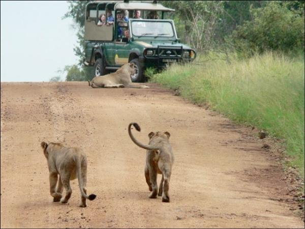 There is frequent Traffic Jam on African Roads!!!