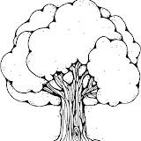 dji_green_tree_b.jpg