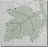 fine_tune_the_leaf