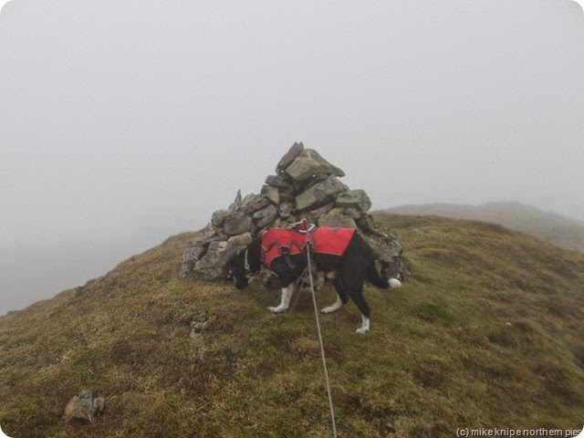 mount ida summit cairn and dog