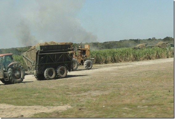Cutting the Sugar Cane