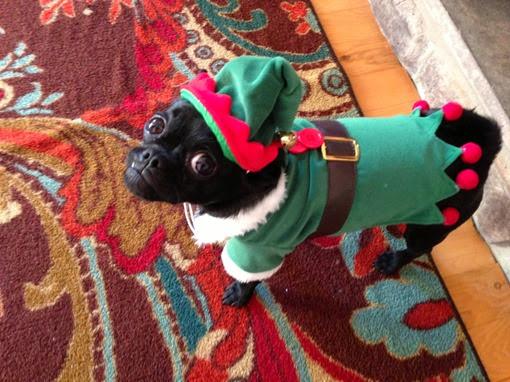 Собака в костюме эльфа