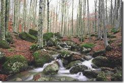 foreste7