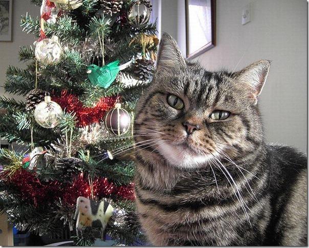 Gatos odeiam o natal (17)
