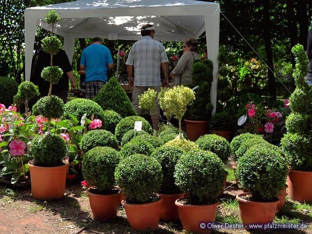 Gartentage bellheim 2011 sonntag pfalzmeister blog for Blechtiere garten