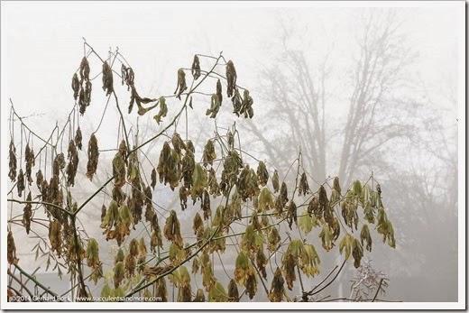 141223_fog_003