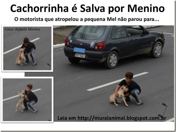 Cachorrinha é Salva por Menino