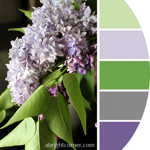 Lilacs in May 2