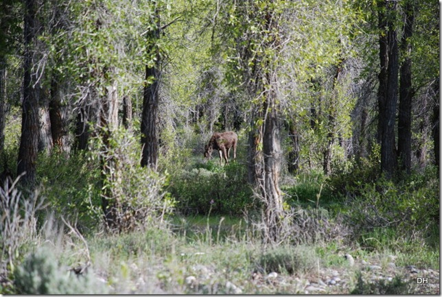 06-03-13 B Grand Teton National Park (57)