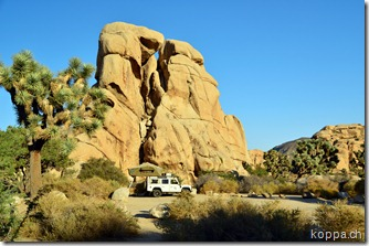 110928 Joshua Tree NP (13)