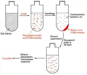 CTAB method of extraction