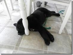 puppy training 09