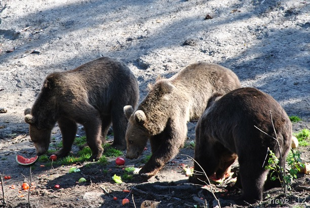 Bjørneparken 016