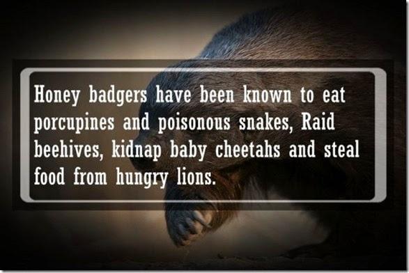 interesting-animal-facts-006