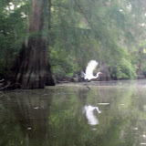 Two OClock Bayou Paddle July 14, 2012 - IMG_0057.JPG
