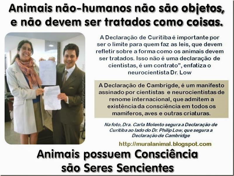 Animais possuem Consciência