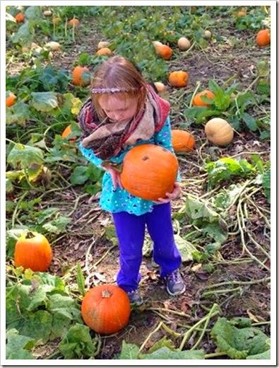 sara pumpkin edited one