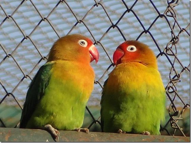 Santiago_Zoo_DSC03790