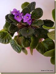 Happy violet