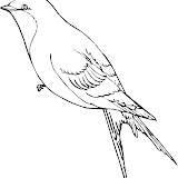 swallow-2-coloring-page.jpg