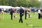 20100513-Bullmastiff-Clubmatch_30945.jpg