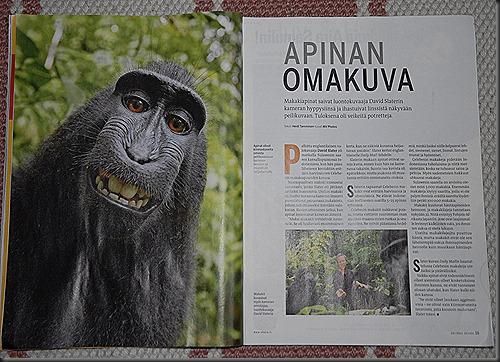 apinan oma kuva 003