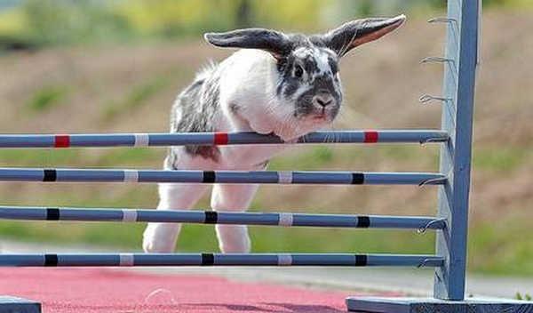9- Saltos de coelhos