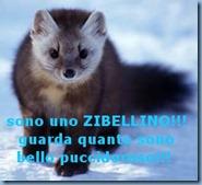 martes-zibellina5