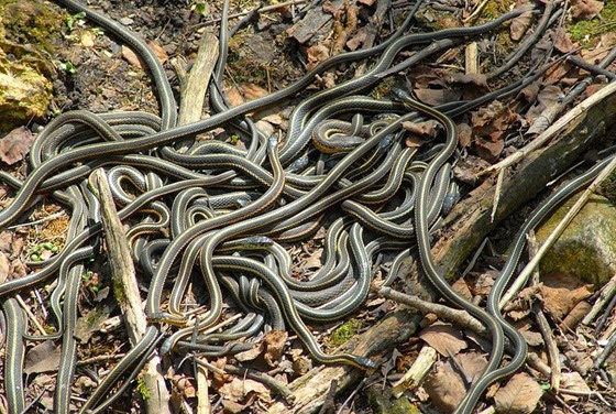 narcisse-snake-pits-4
