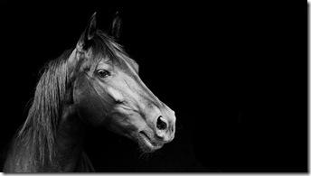 cal-fundal-negru