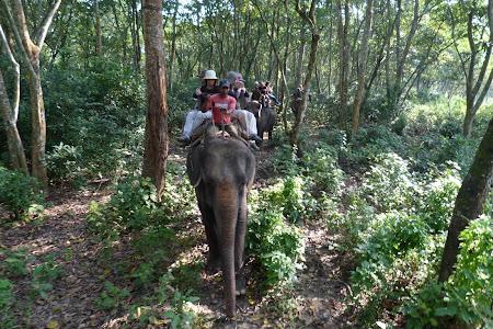 Safari elefanti jungla