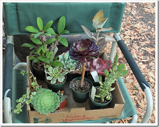111003_plants-from-succulent-gardens_-02