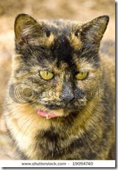 tortoise shell cat