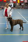20130510-Bullmastiff-Worldcup-0415.jpg