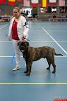 20130510-Bullmastiff-Worldcup-0415.jpg