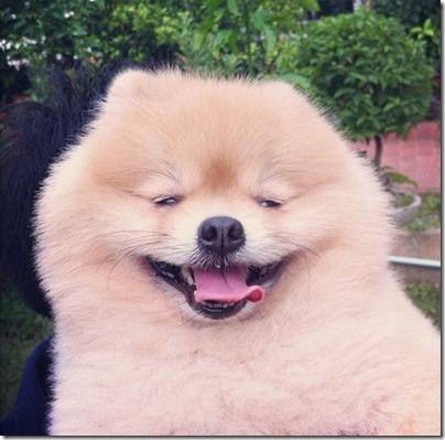 fotos gradiosas de perros capitanpalomo (24)