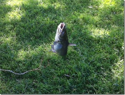 07-19-13 fishing 26