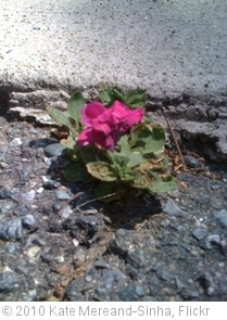 'Beauty from Adversity' photo (c) 2010, Kate Mereand-Sinha - license: http://creativecommons.org/licenses/by/2.0/