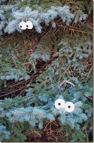 spooky tree eyes