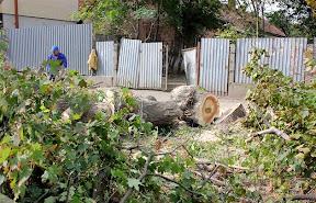В Ужгороде на Швабской срежут все деревья 5.jpg