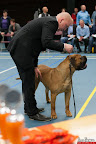 20130510-Bullmastiff-Worldcup-0409.jpg