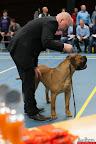 20130510-Bullmastiff-Worldcup-0409.jpg