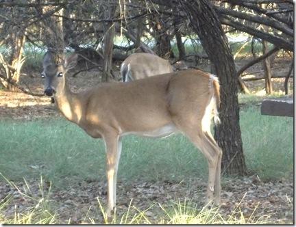 Deer visit 018