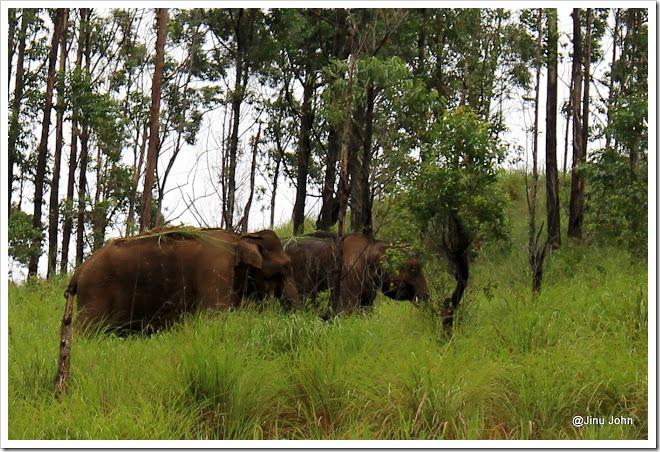 Gavi  Elephant