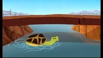 12 la tortue