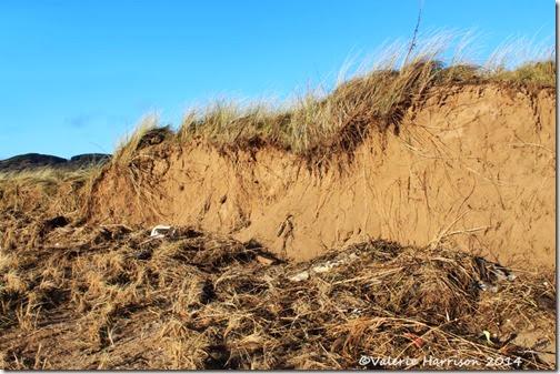 21-damaged-dunes