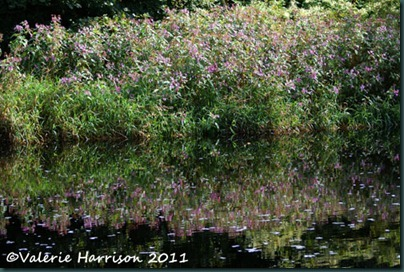 7-reflected-balsam